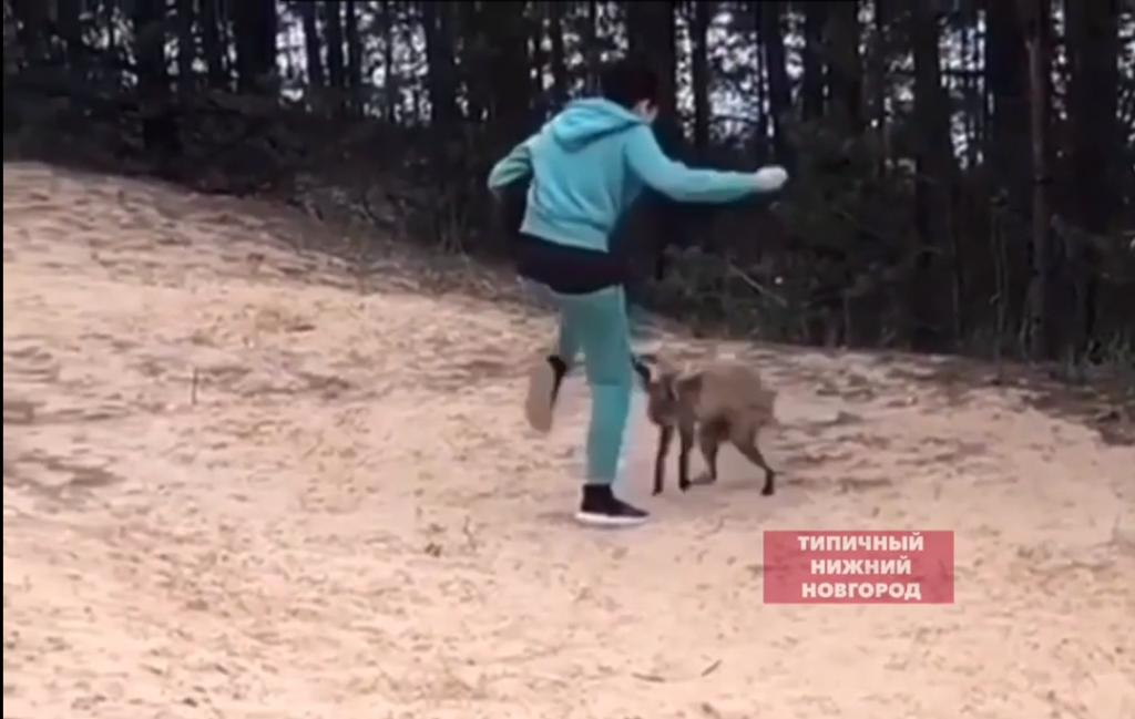 Видео дня: агрессивная лиса напала на нижегородку