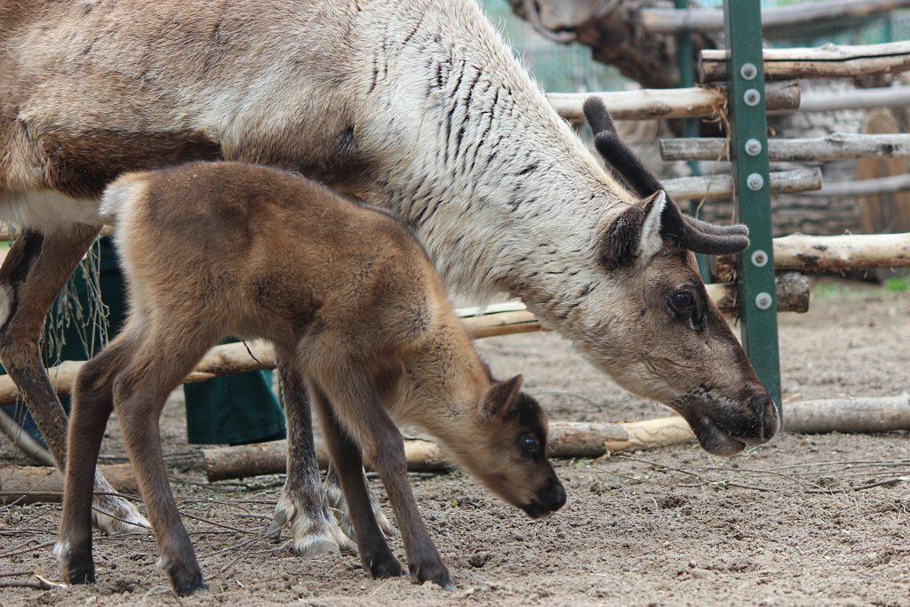 Владельцы нижегородских зоопарков и питомников рассказали, как выживают звери в период самоизоляции