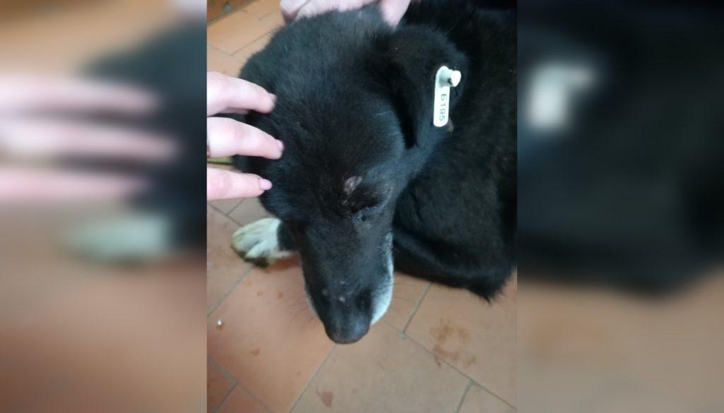 Двух нижегородцев будут судить за жестокое избиение собаки