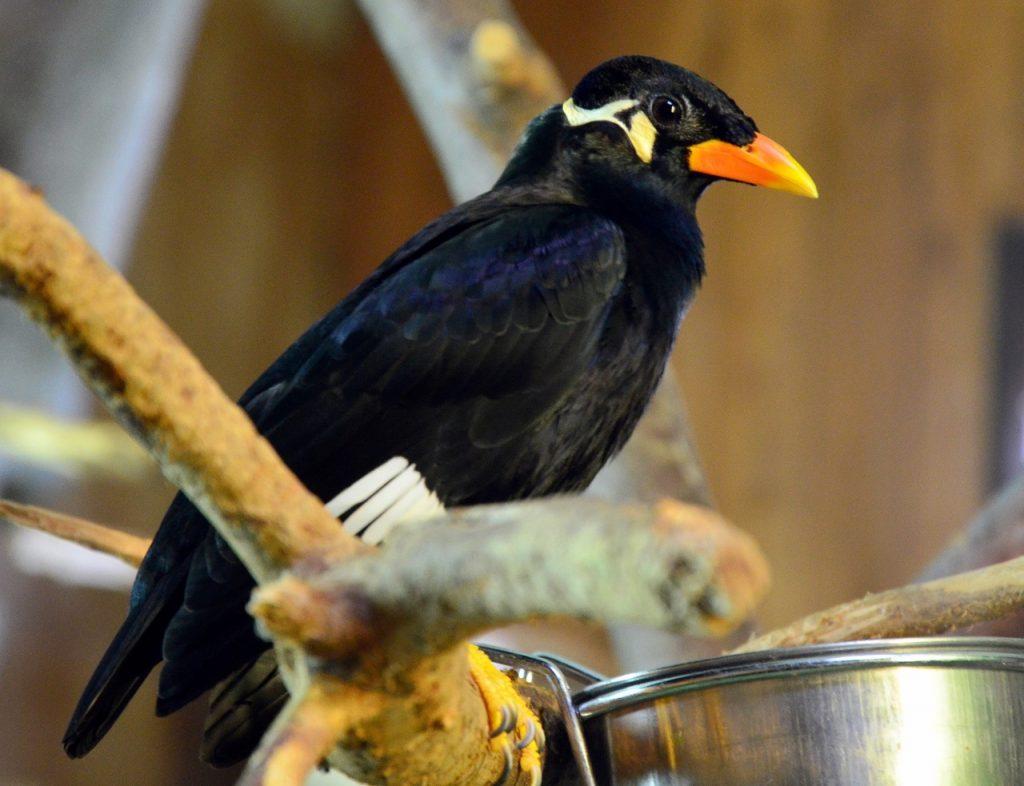 «Чаю хочешь?»: священная птица заговорила в нижегородском зоопарке