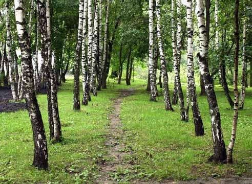 Застройщик пересадит более 100 кустарников и посадит новые деревья из-за строительства на улице Рокоссовского