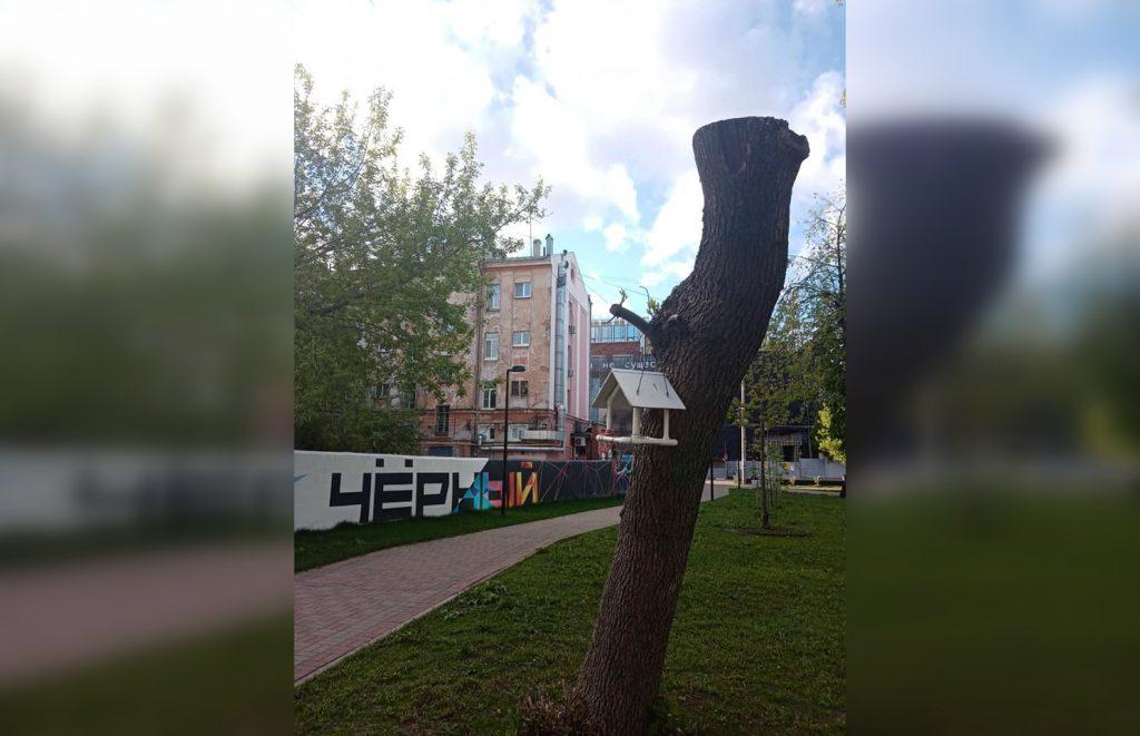 Выясняем, зачем в Нижнем Новгороде деревья превращают в пеньки