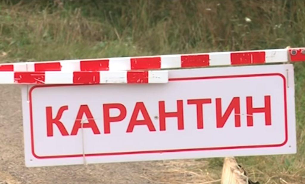 Правда или ложь: в Нижегородской области вспышка бешенства?