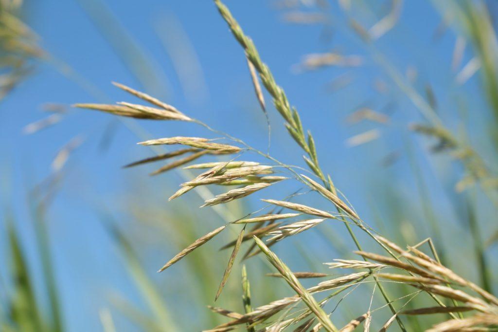 Солнечная погода ожидает нижегородцев в первые дни июля