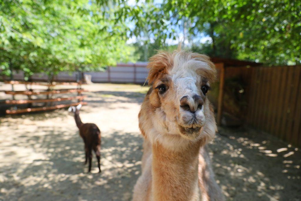 Один день в зоопарке «Лимпопо»: репортаж о жизни братьев наших меньших и больших