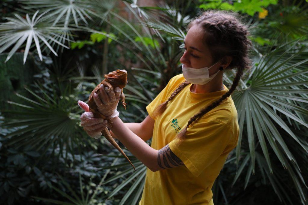 лимпопо рептилия кипер амазония