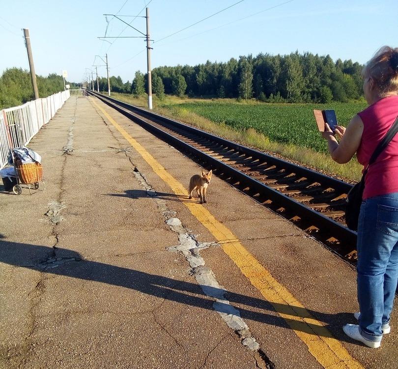 Фото дня: Лисенок появился на железнодорожной станции Балахнинского района