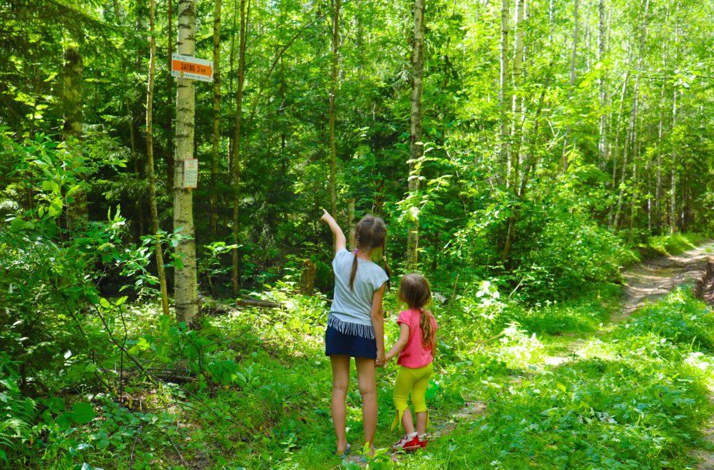 Более 100 стрелок-указателей появилось в лесах Нижегородской области