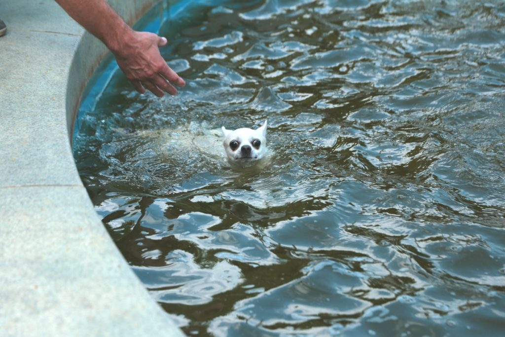 Эксперты Роспотребнадзора рассказали, чем опасны купания в фонтане