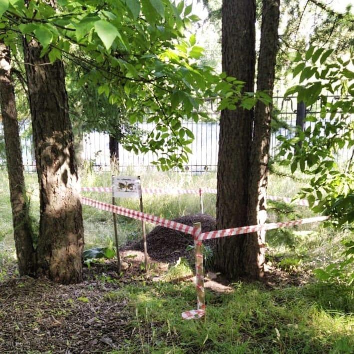 Экопост развернут в парке «Швейцария»