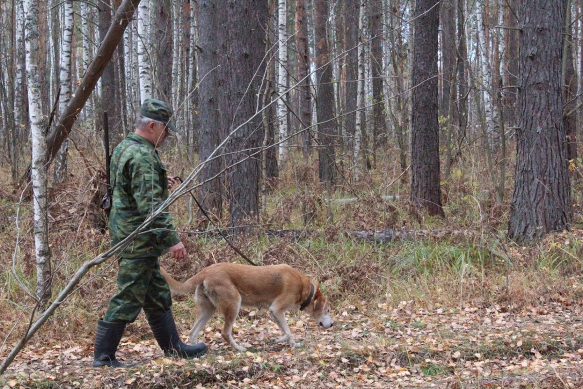 С20августа началась выдача разрешений охотникам надобычу пушных животных