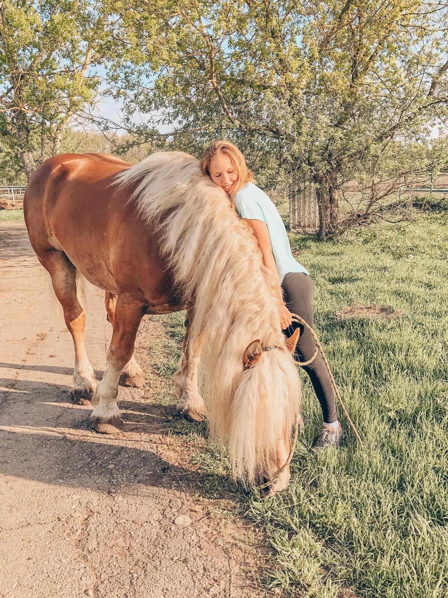 лошадь конезавод Перевоз