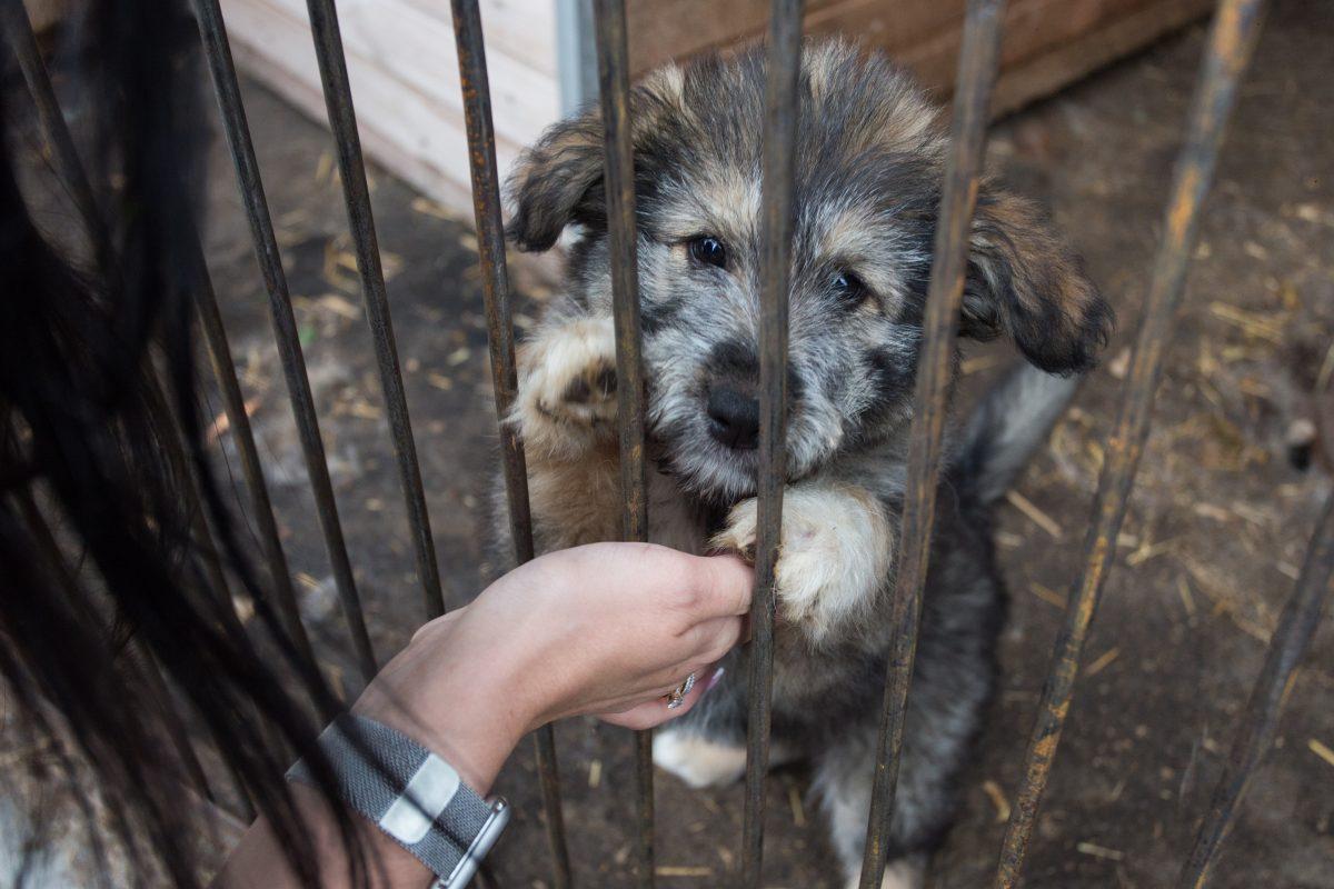Нижегородские волонтеры передали 300 кг корма для приюта бездомных животных