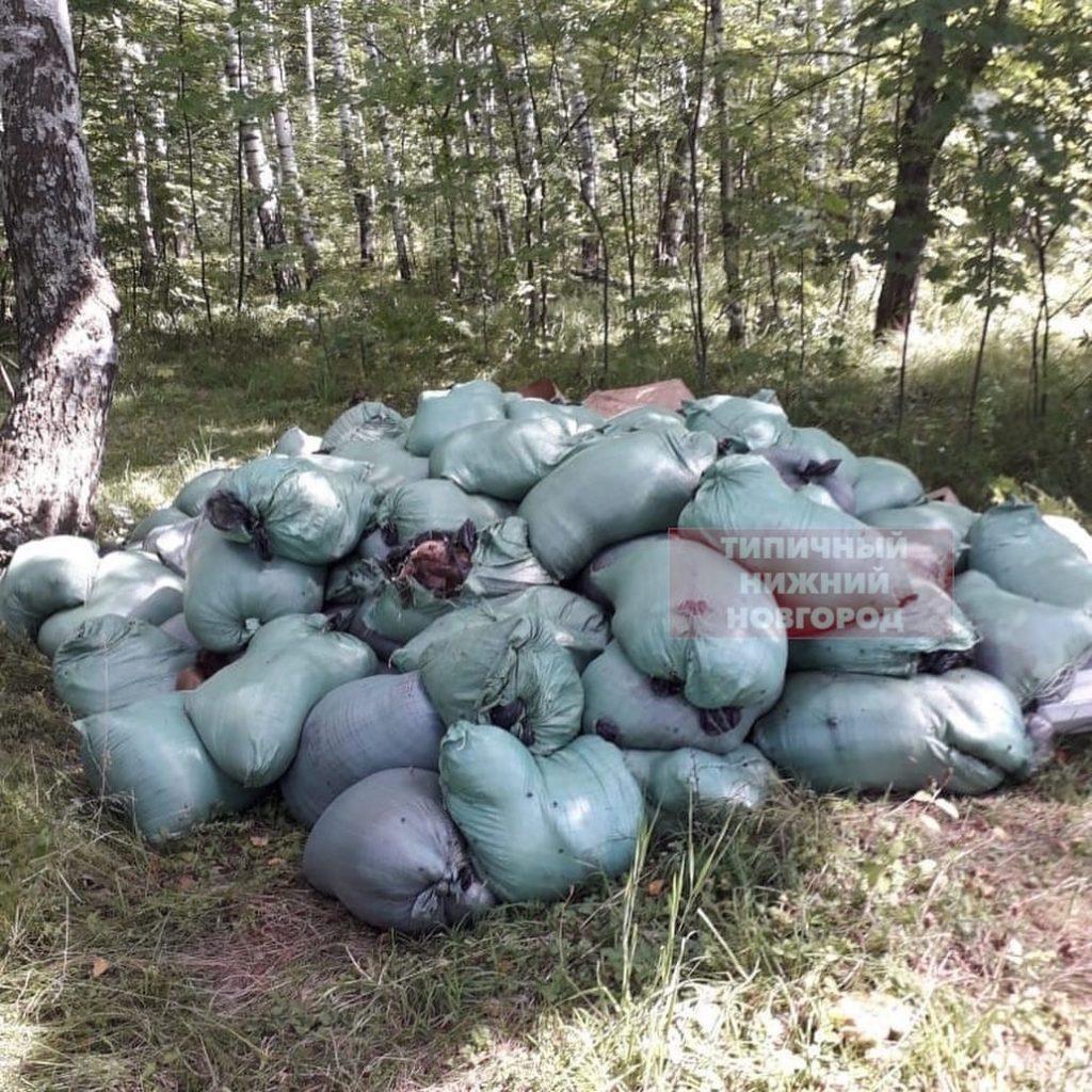 Специалисты госветнадзора ликвидируют свалку биологических отходов в Кстовском районе