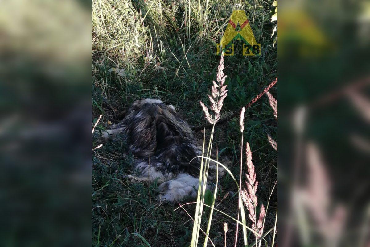 «Привязали к дереву и оставили умирать»: жители Арзамаса обнаружили в лесу брошенную собаку