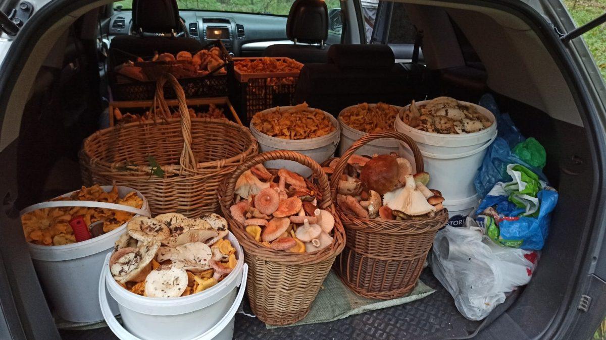 Нижегородцы похвастались богатым грибным уловом