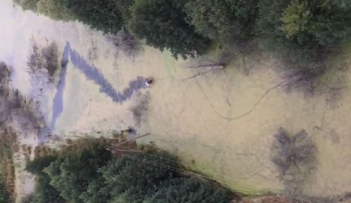 Нижегородец запечатлел лося, переплывающего болото, с высоты птичьего полета