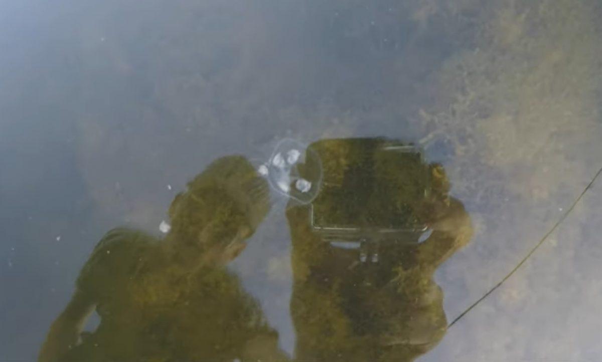 Стаю медуз обнаружил рыбак в дзержинском водоёме