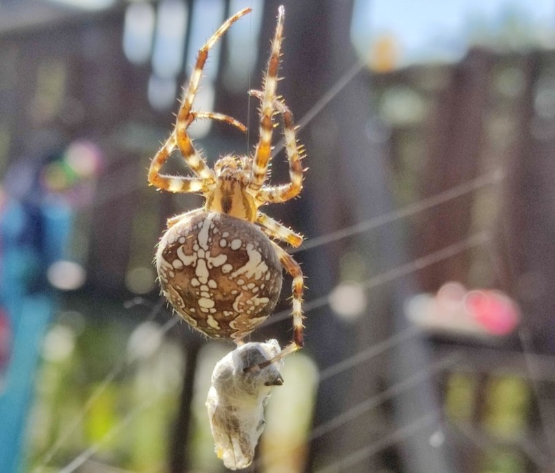 Нижегородцы нашли в городе пауков-гигантов