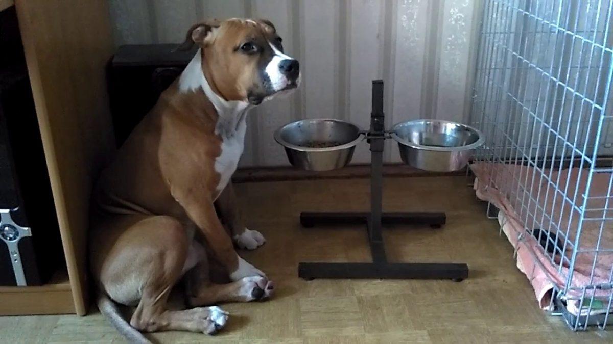 Стали известны подробности нападения собаки на своих хозяев в Дзержинске