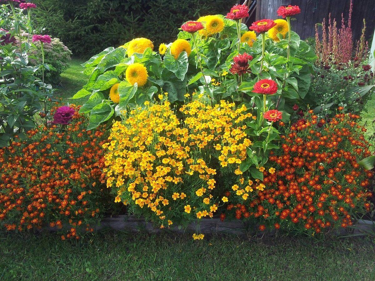 цветы блохин