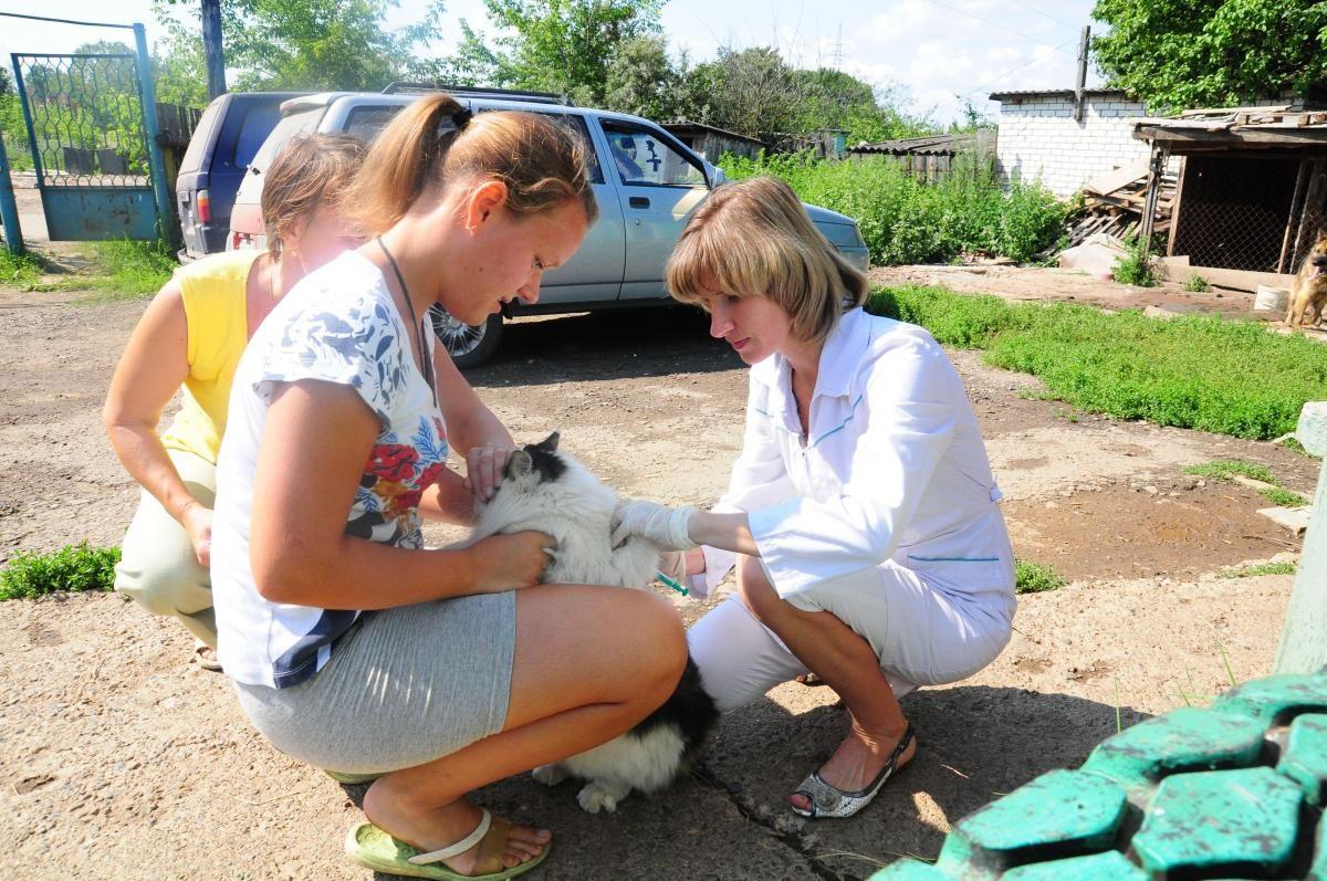 Жители Сормовского района смогут бесплатно привить домашних животных от бешенства