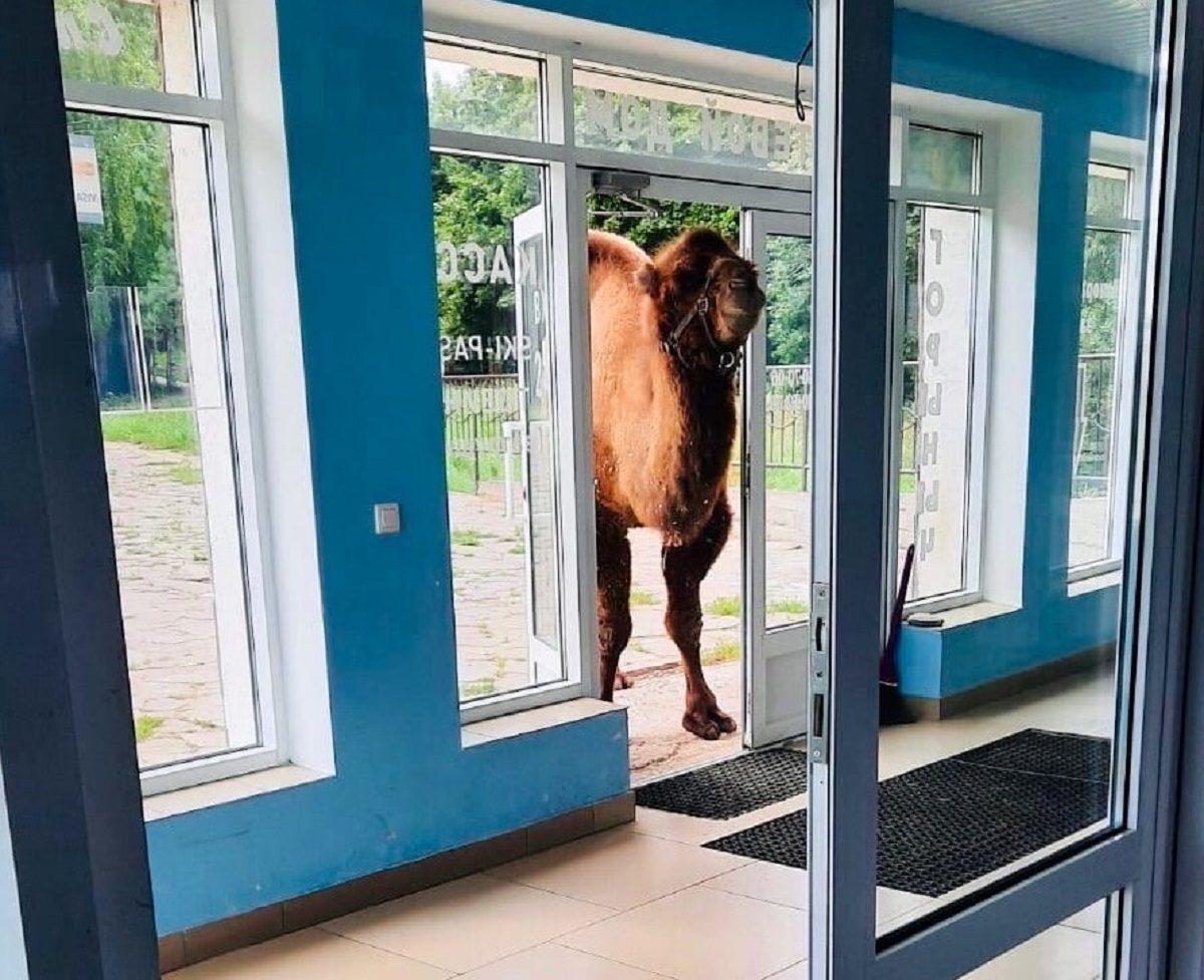 Фото дня: экзотический гость заглянул в гостиничный комплекс в спортивой деревне «Новинки»