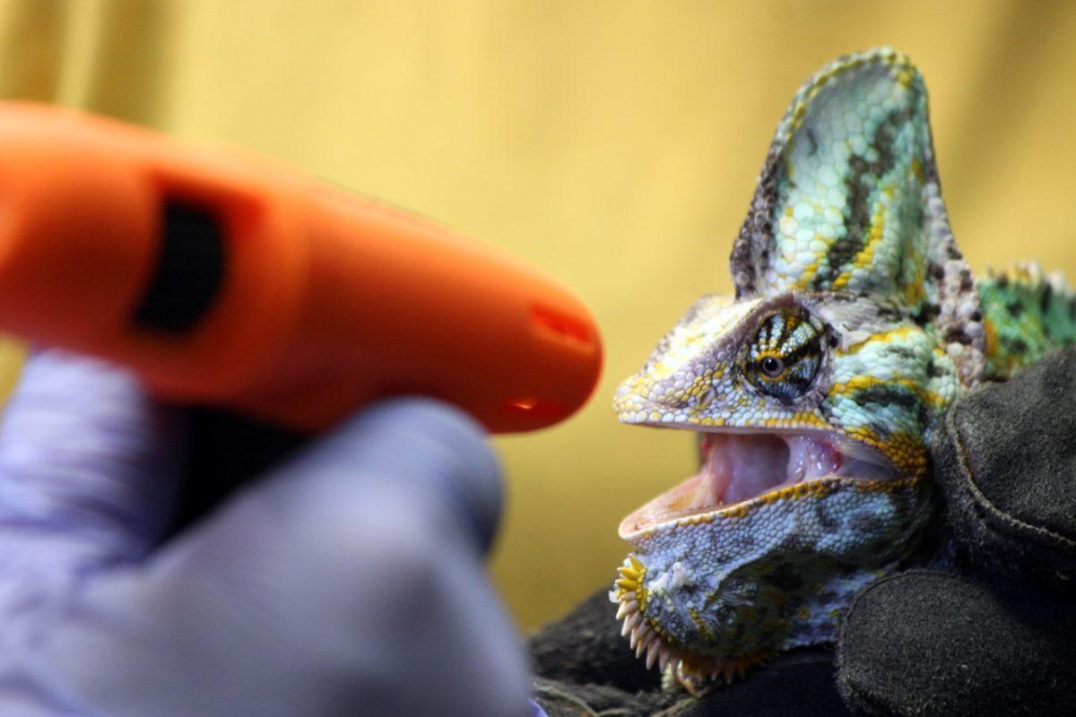 Жителям зоопарка «Лимпопо» впервые проверили зрение: смотрим яркие кадры