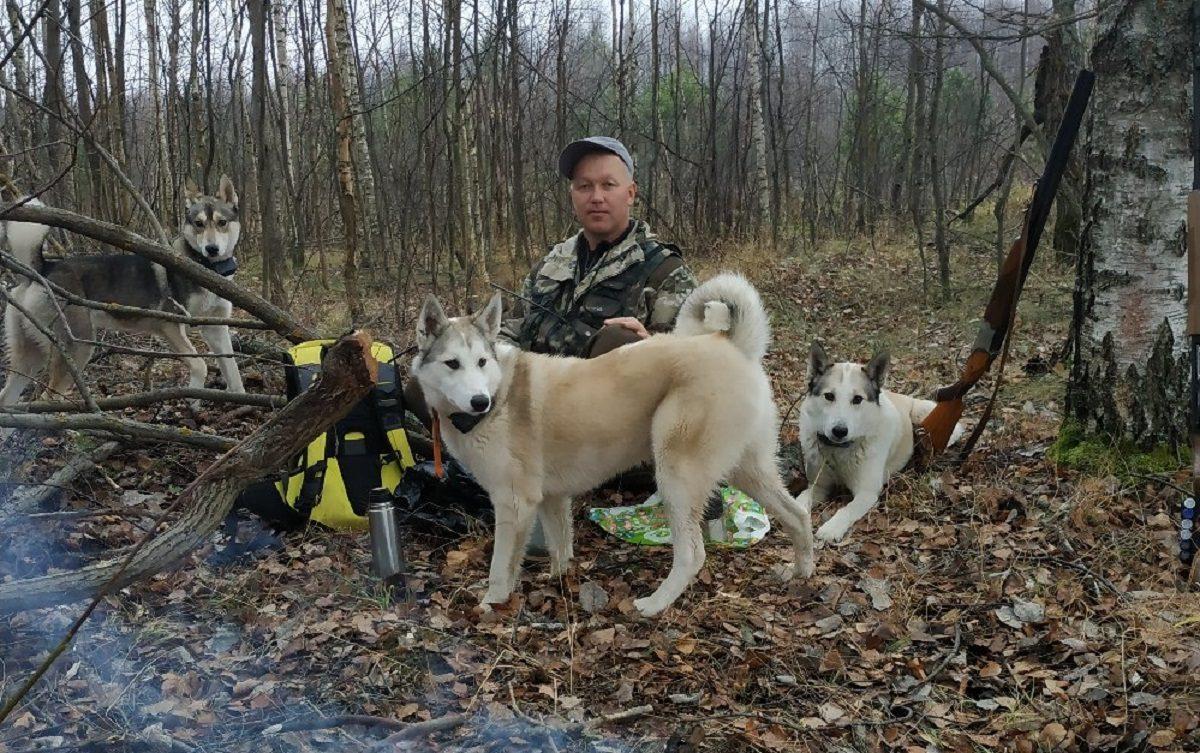 «Собаки постоянно должны работать»: егерь из Арзамасского района рассказал о своих четвероногих помощниках