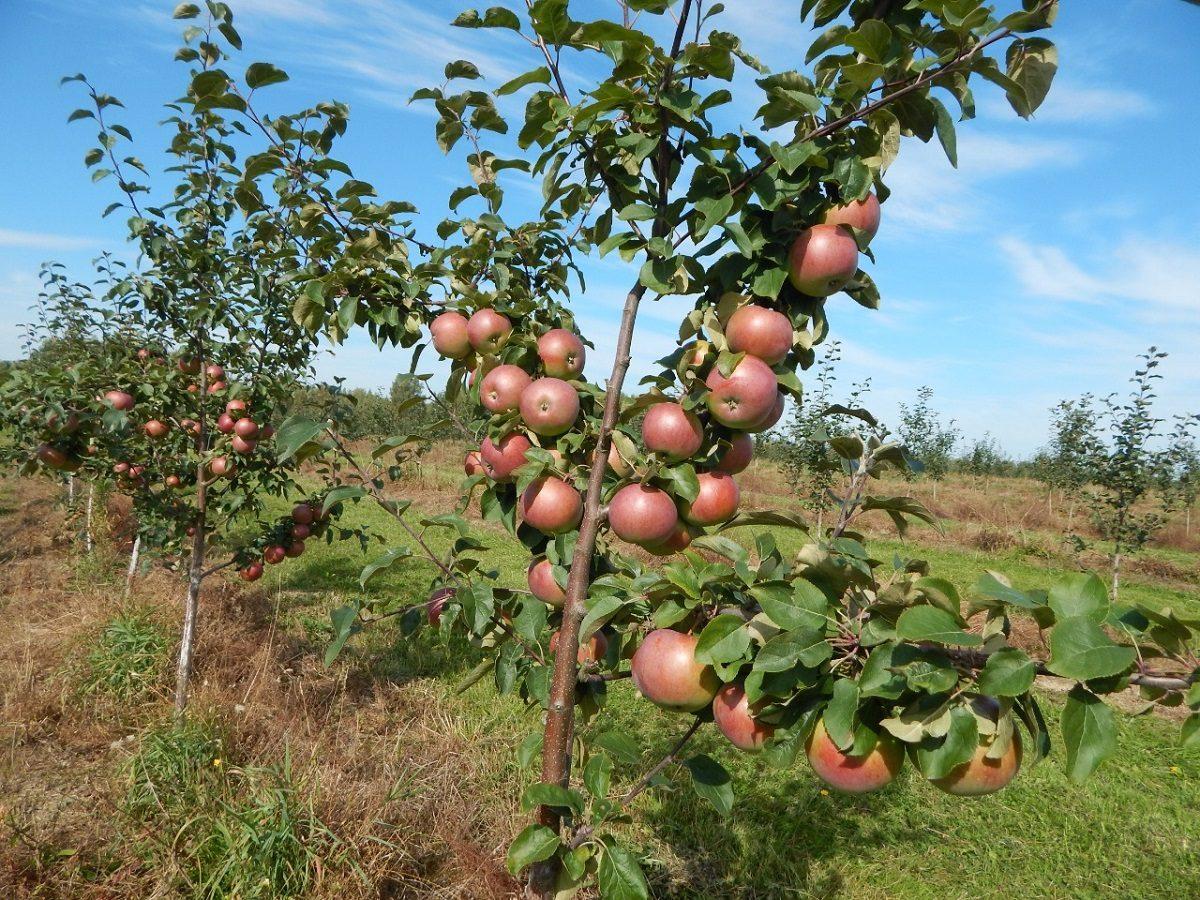 Глеб Никитин: «Около 30 млн рублей будет направлено наразвитие садоводства врегионе»