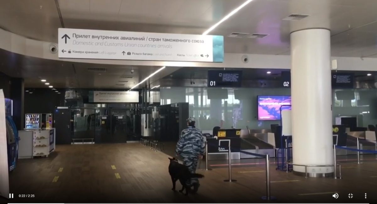 Фантик нашел кое-что запрещенное в аэропорту: у нижегородского корги-полицейского появился сменщик