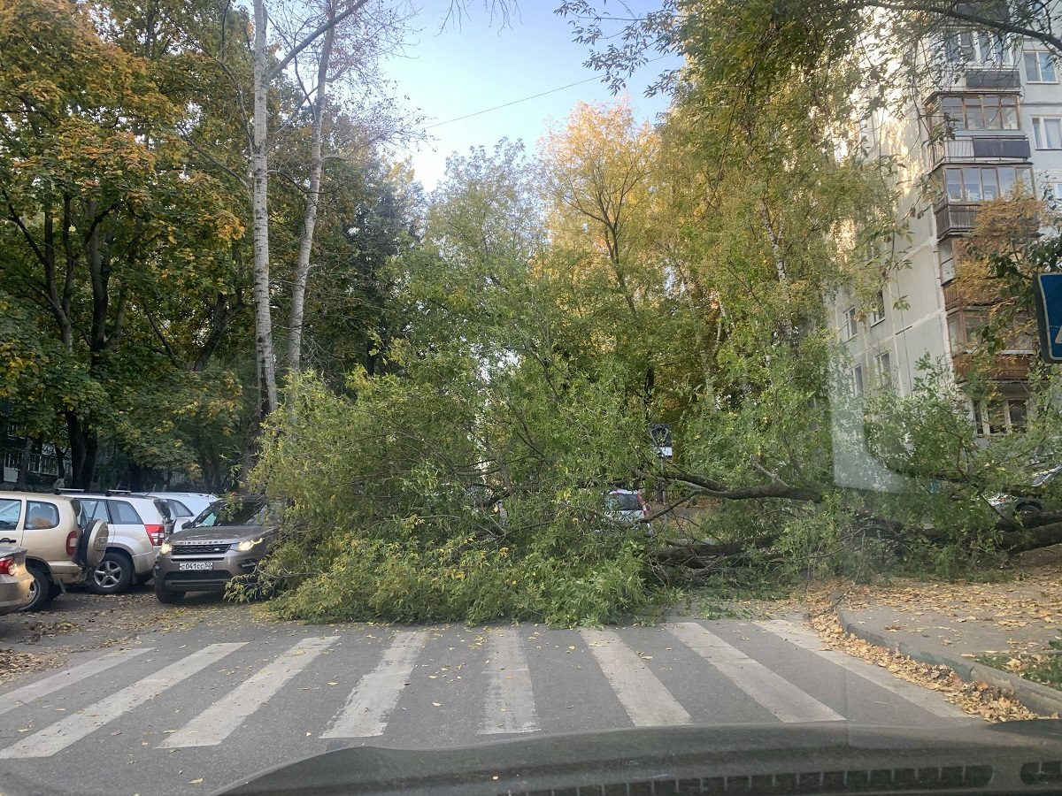 Упавшее дерево перегородило дорогу на улице Провиантской