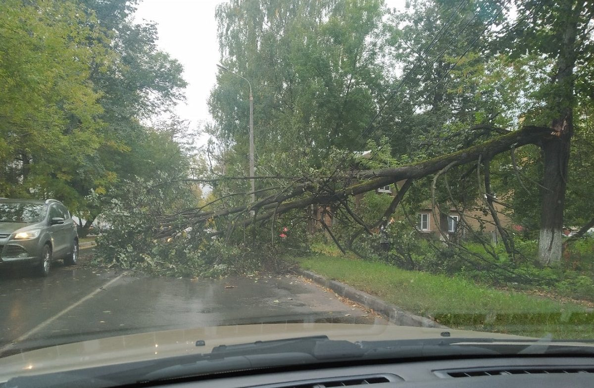 Дерево упало на проезжую часть от сильного ветра на улице Бориса Панина