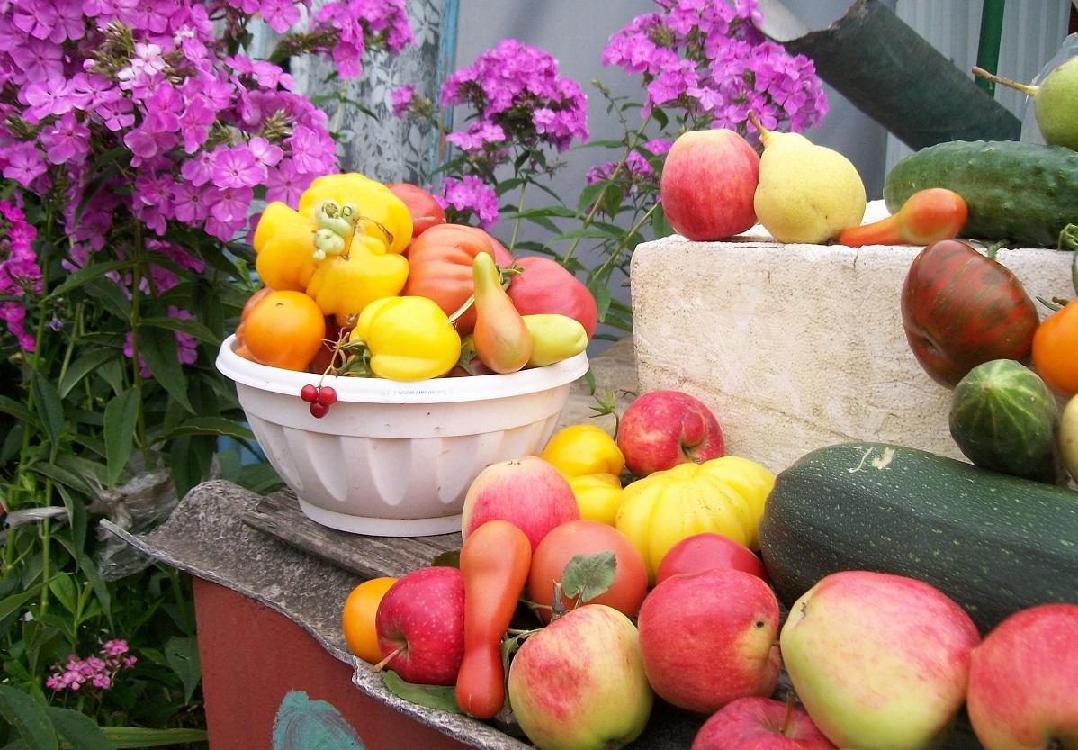 урожай огород овощи