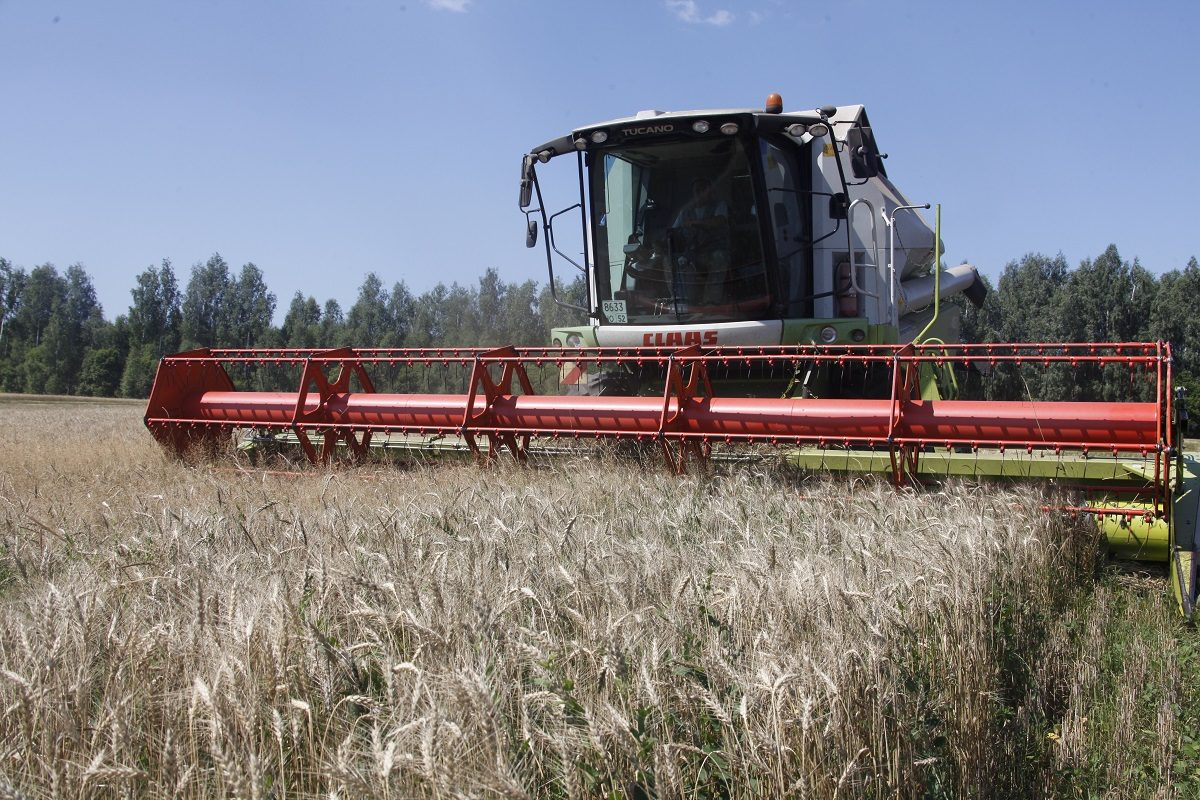 Пошли на рекорд: Сеченовский район стал лидером по урожаю зерна