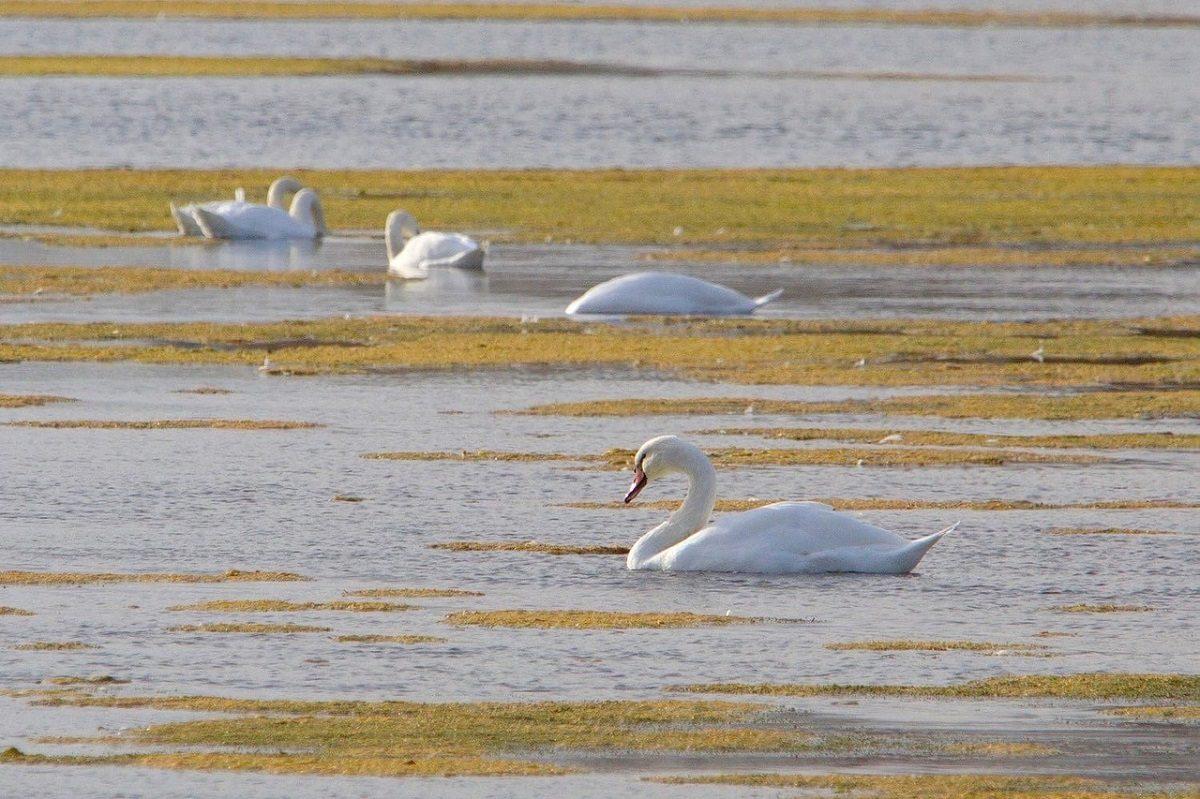 «Лебединое озеро» образовалось в Нижегородской области