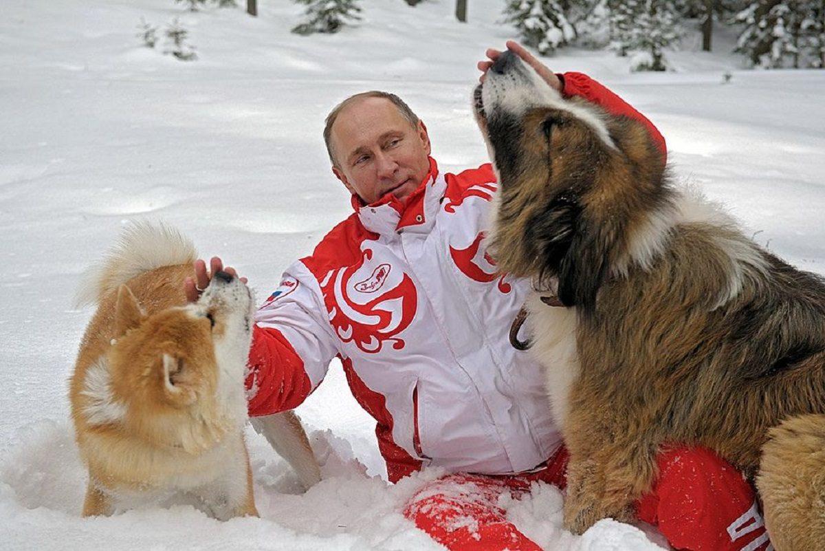 Собаки, пони и эротический календарь: самые необычные подарки Владимиру Путину