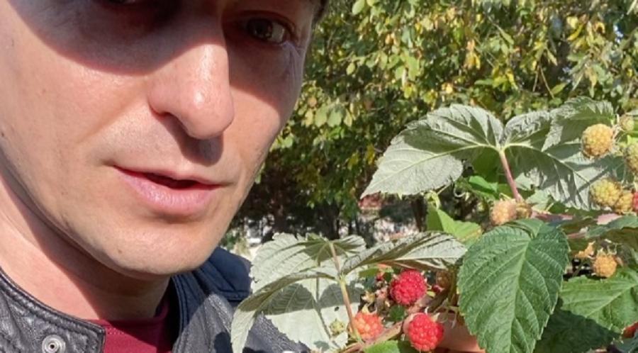 Безруков похвастался урожаем малины в октябре