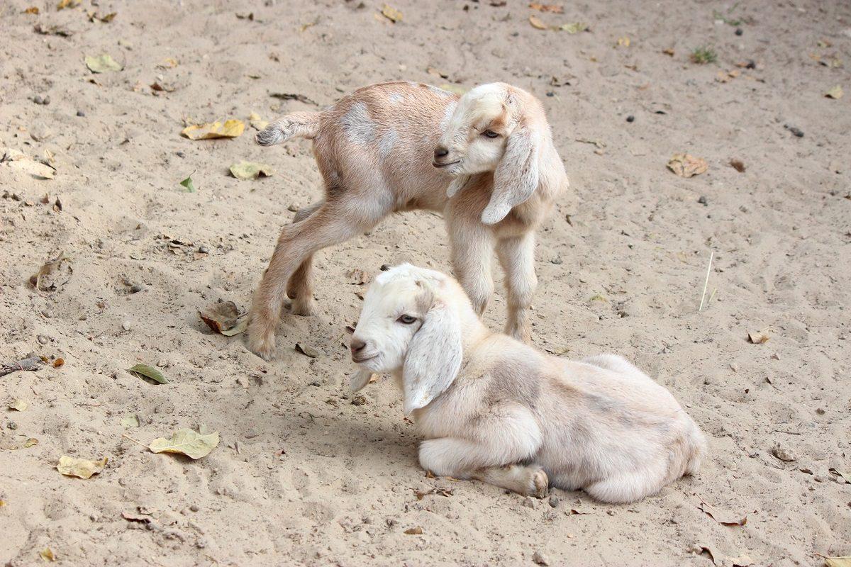 В нижегородском зоопарке «Лимпопо» бэби-бум