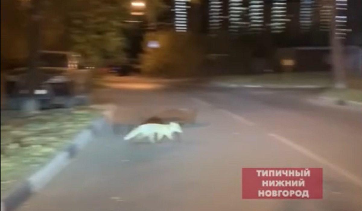 🦊 прогулялась в Советском районе Нижнего Новгорода