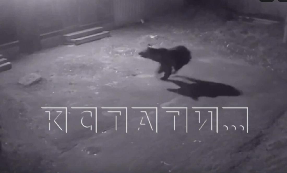 Медведь устроил переполох в Семёнове