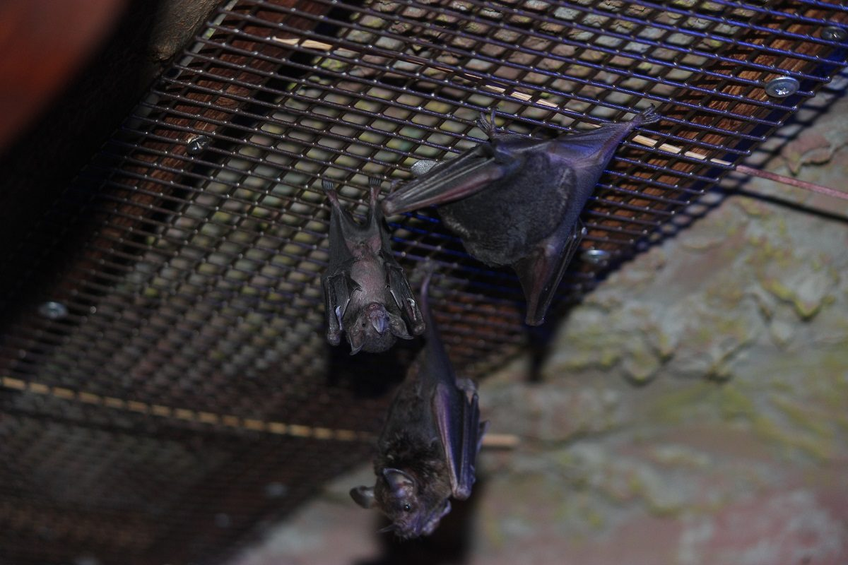 В зоопарке «Лимпопо» появился на свет летучий мышонок