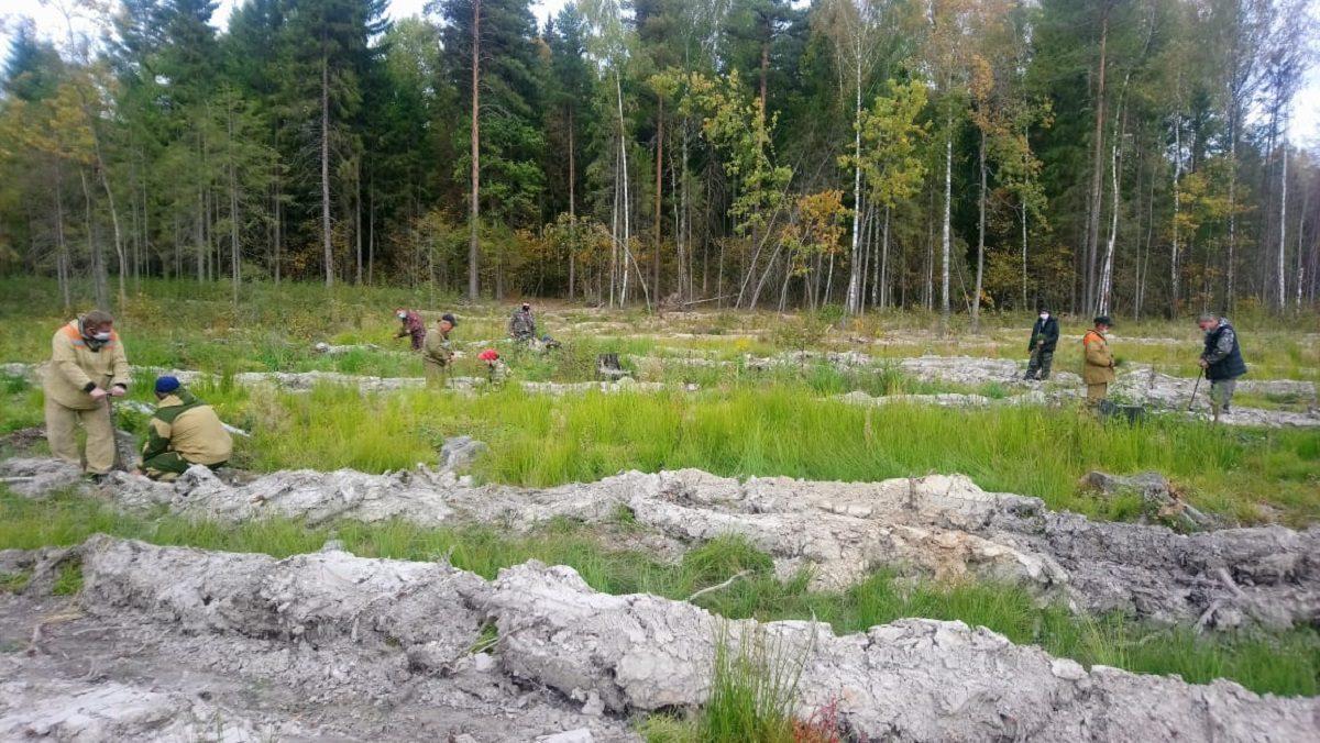 ВНижегородской области высадили более 200 тысяч деревьев врамках акции «Сохраним лес»