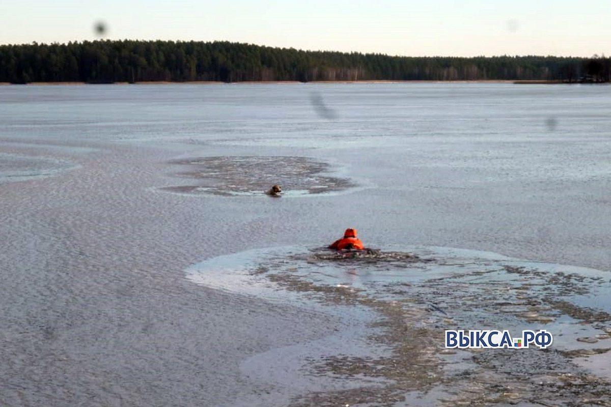 Спасатели вытащили собаку, провалившуюся под лед в Выксе