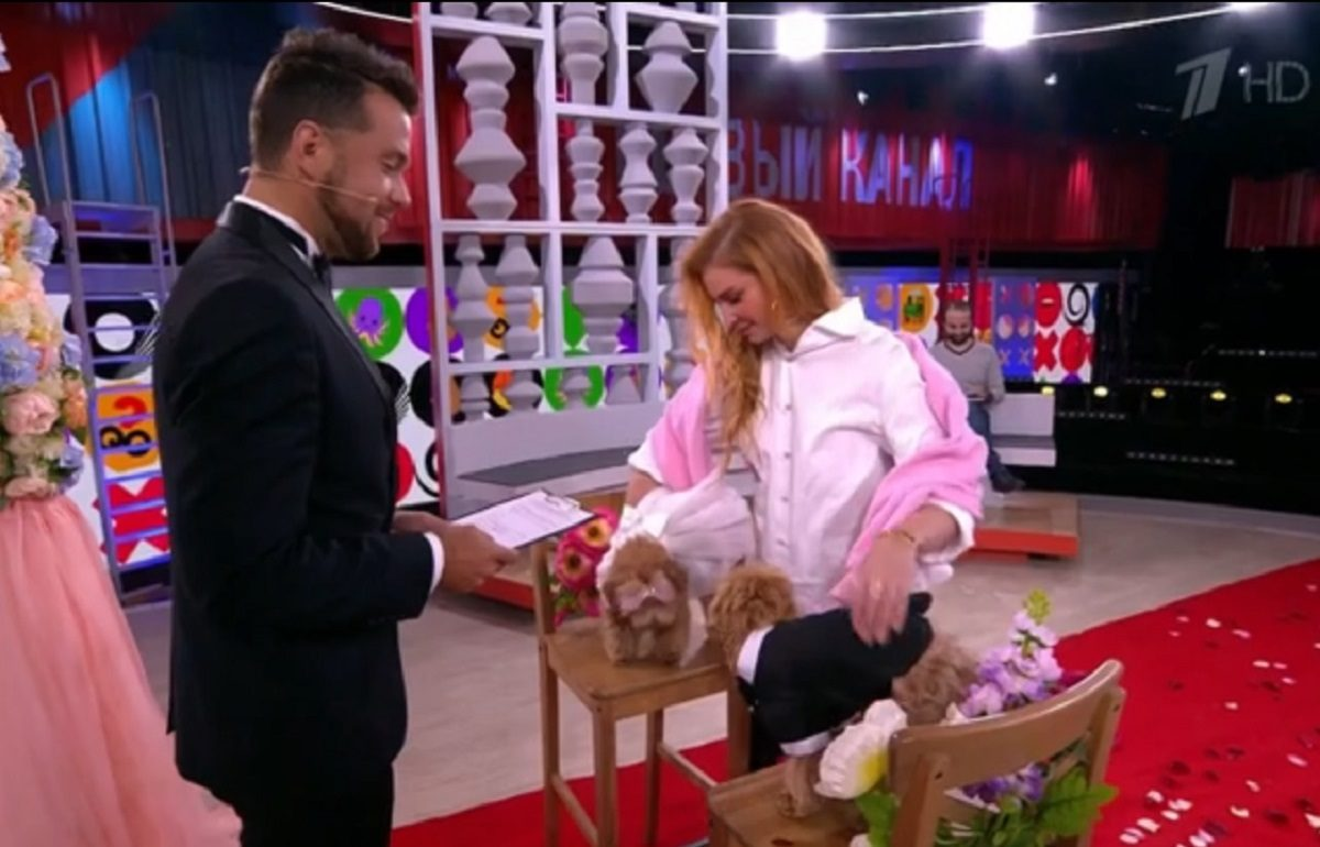 Нижегородец поженил собак на Первом канале