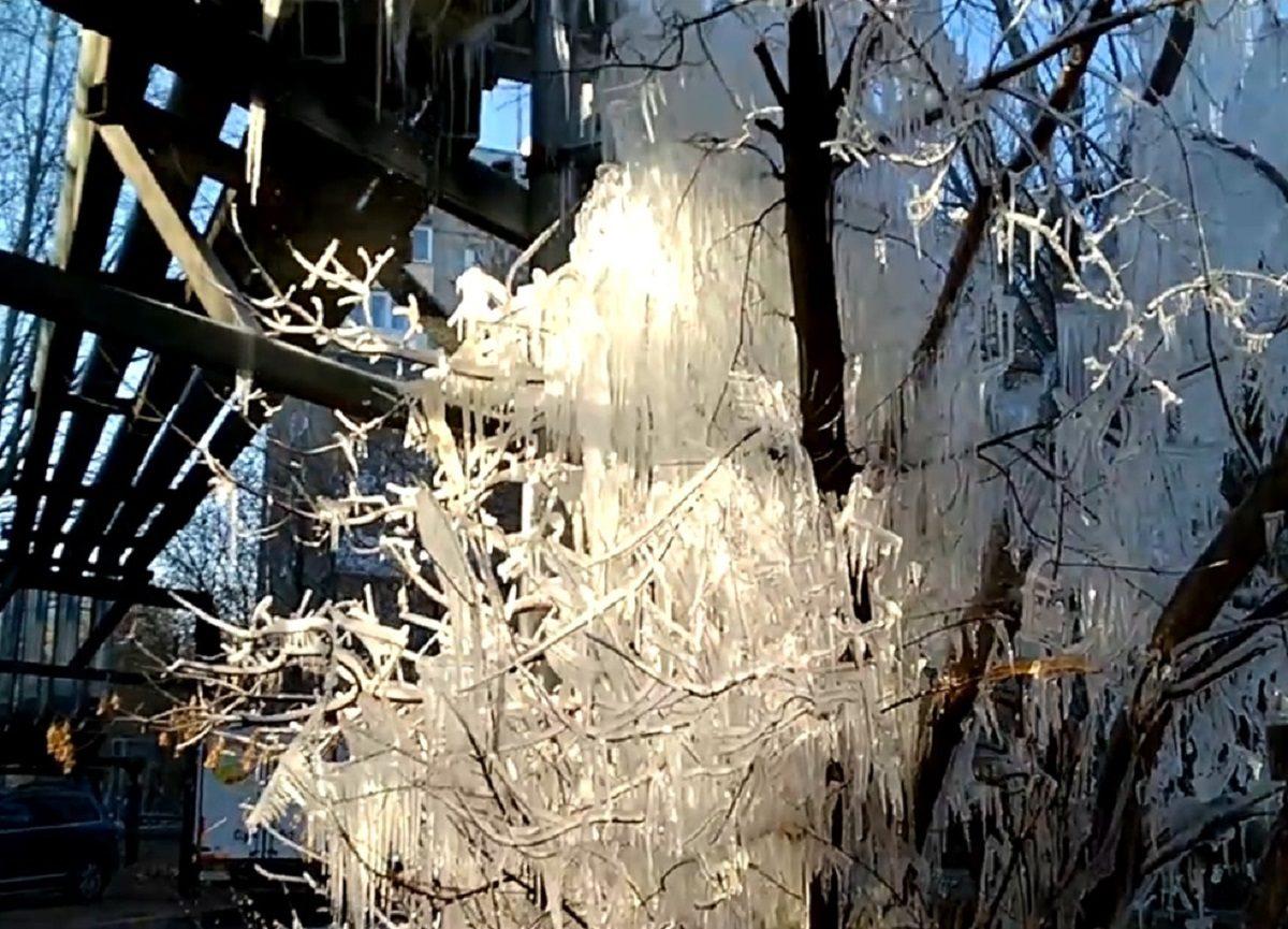 «Ледяное дерево» образовалось на Московском шоссе