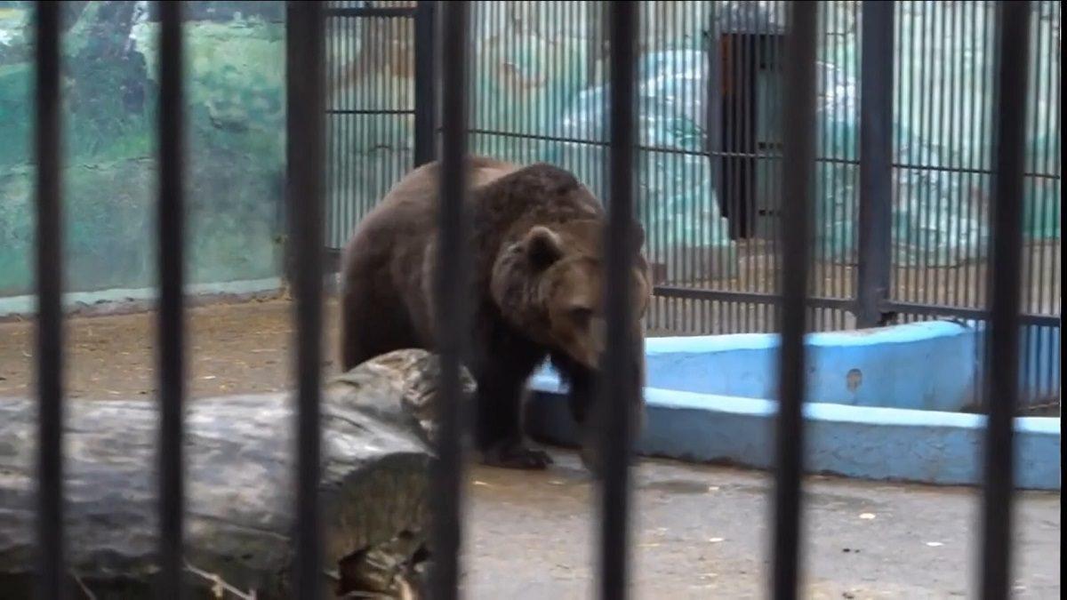 Медведи из зоопарка «Лимпопо» попали на Первый канал