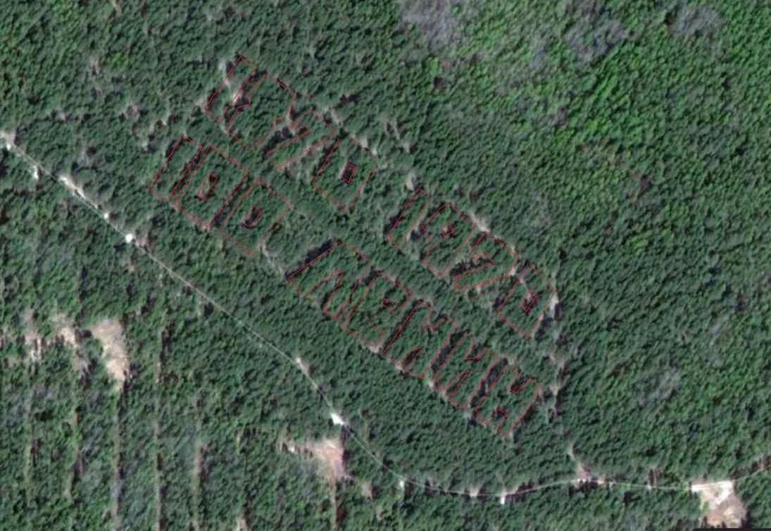 Из космоса разглядели необычную надпись из деревьев на территории Нижегородской области