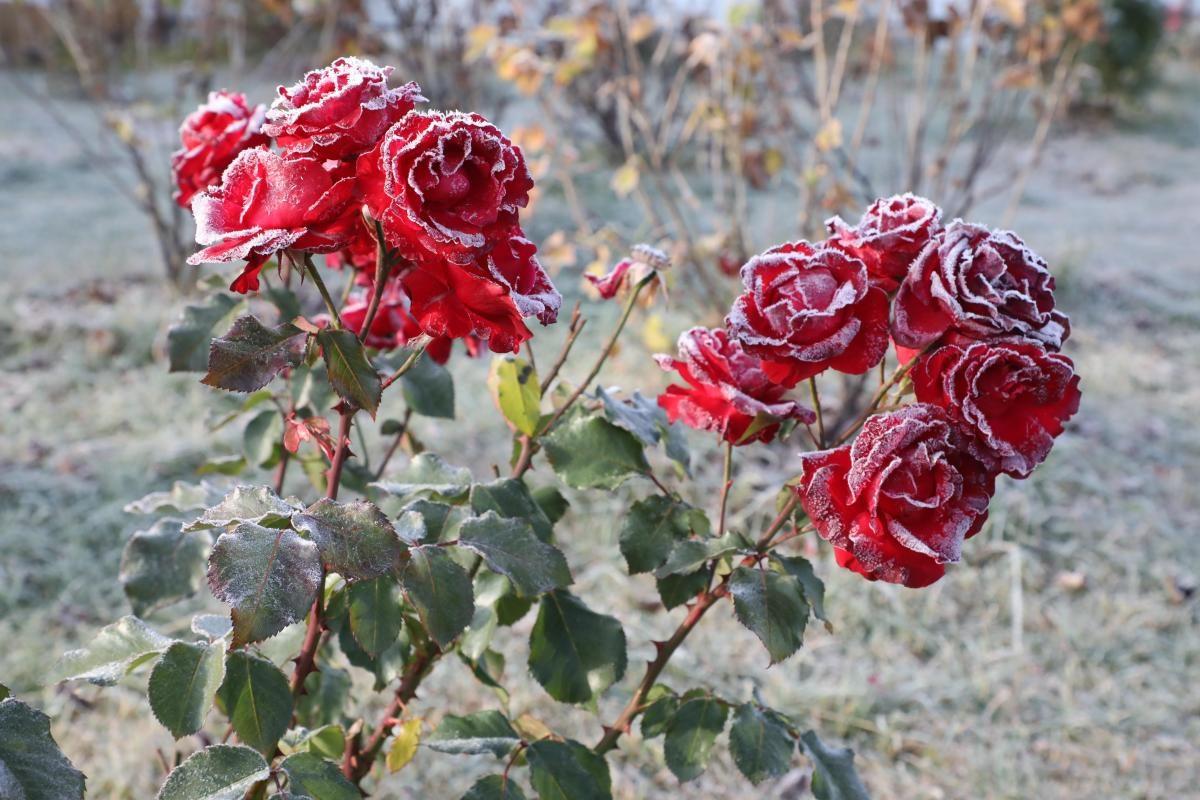 Площадь цветников в Сормове увеличат почти вдвое к 800-летию Нижнего Новгорода