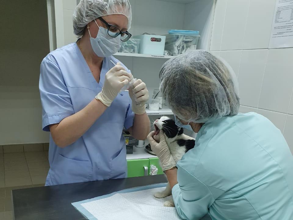 Первые ветеринарные прививочные кабинеты открылись вНижегородской области